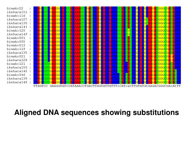 Aligned DNA sequences showing substitutions