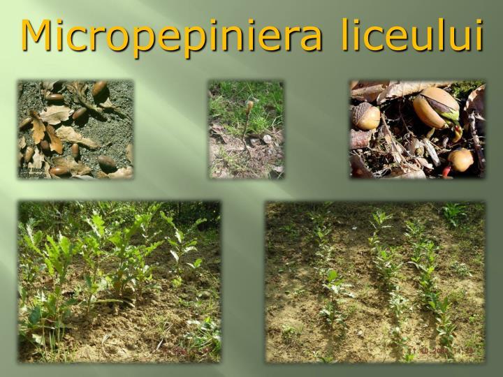 Micropepiniera