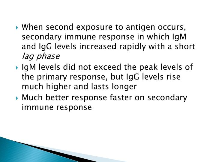 When second exposure to antigen occurs, secondary immune response in which