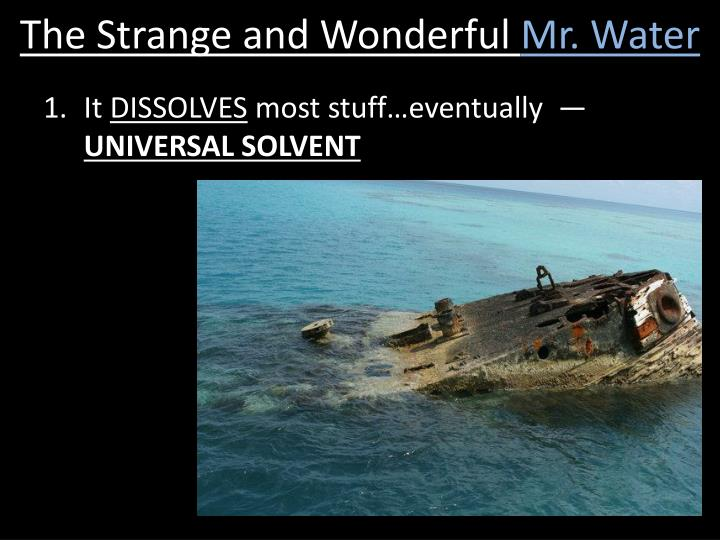 The Strange and Wonderful