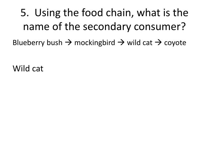 5.  Using the food chain, what is the name of the secondary consumer?