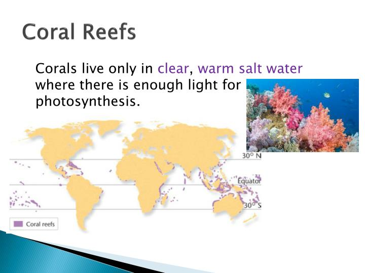 Coral reefs1
