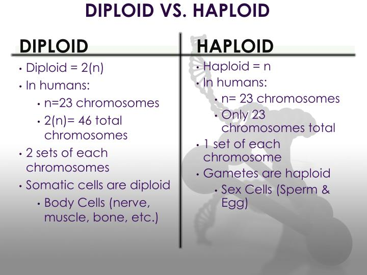 DIPLOID VS. HAPLOID