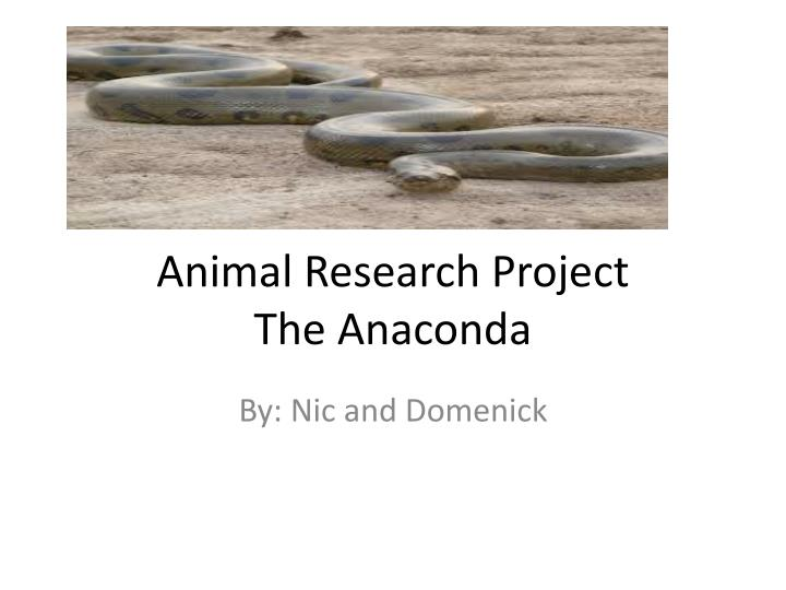 Animal research project the anaconda