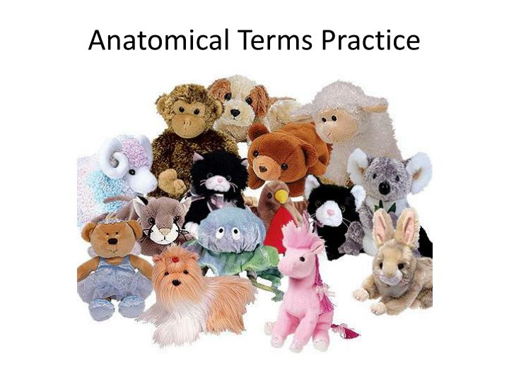 Anatomical Terms Practice