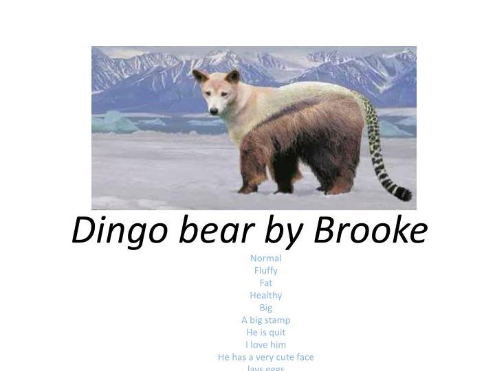 Dingo bear