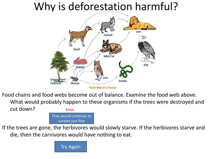 Why is deforestation harmful?