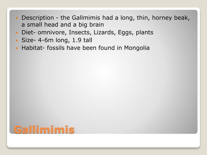 Description - the Gallmimis had a long, thin, horney beak, a small head and a big brain