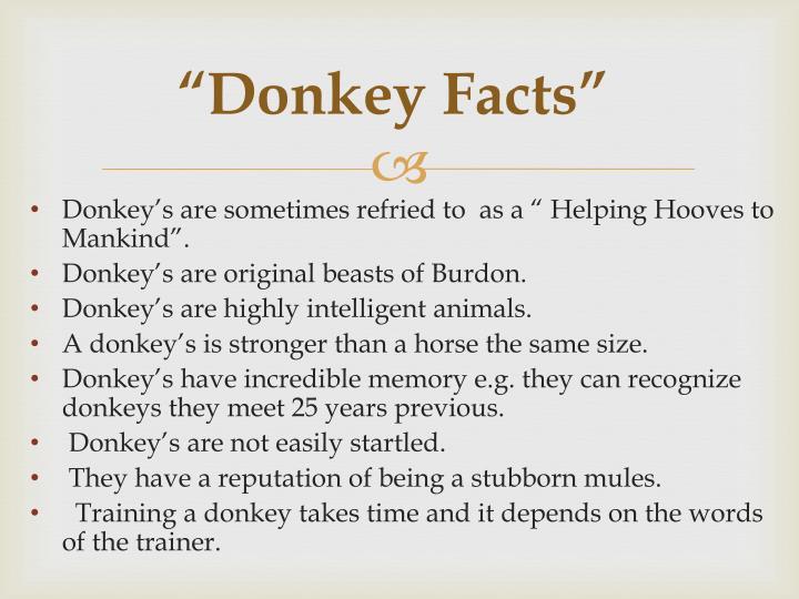 """Donkey Facts"""