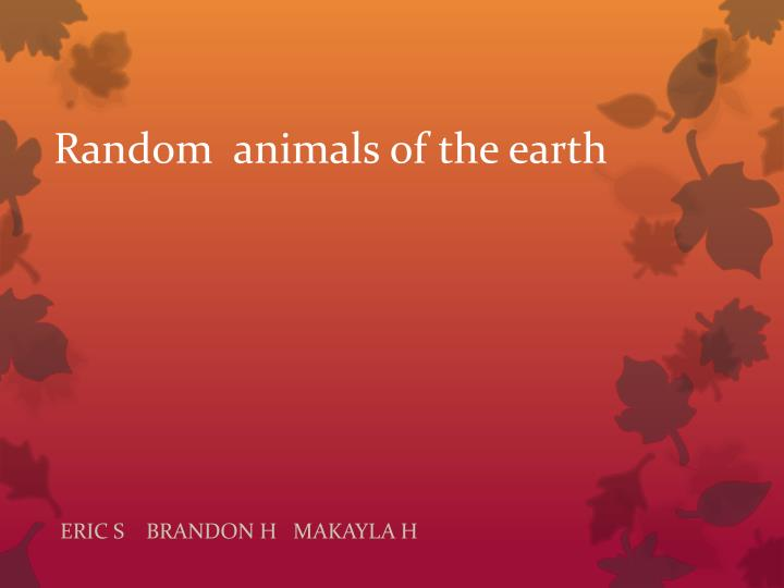 Random animals of the earth