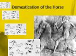domestication of the horse