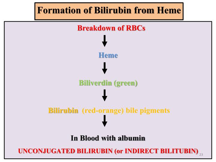 Formation of Bilirubin from