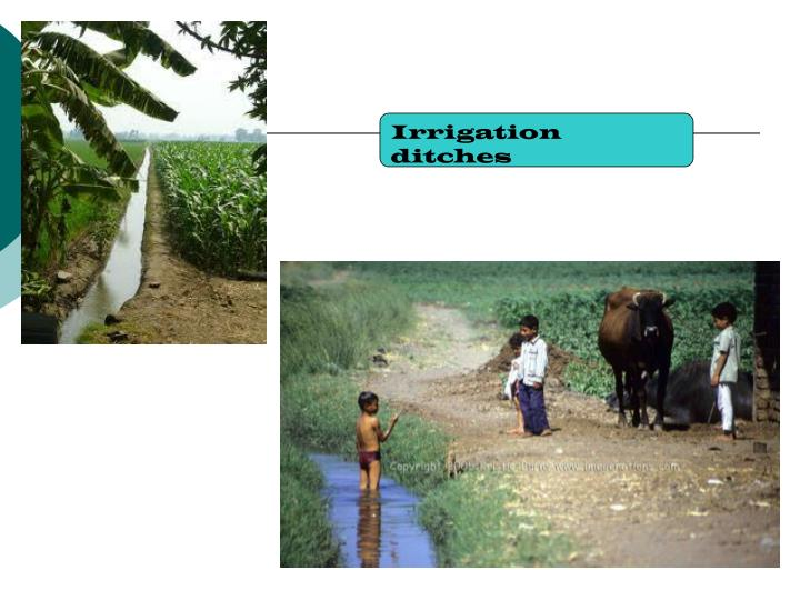 Irrigation ditches
