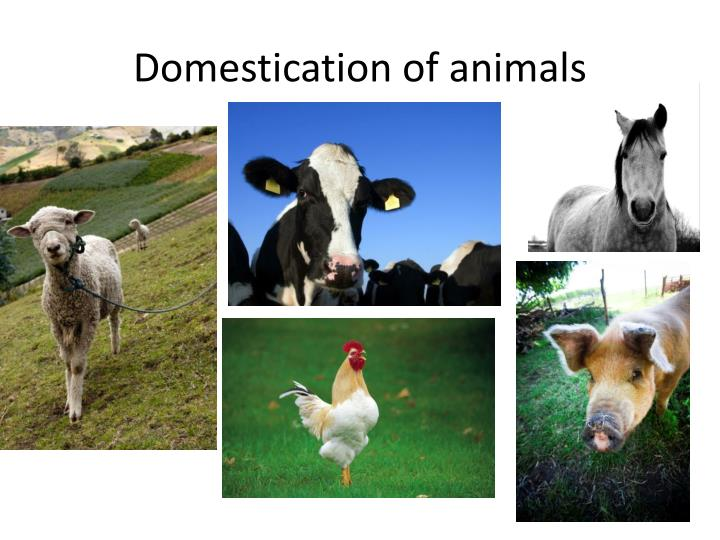 Domestication of animals