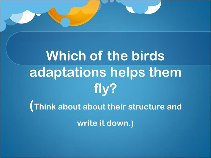 Which of the birds adaptations helps them fly think about about their structure and write it down