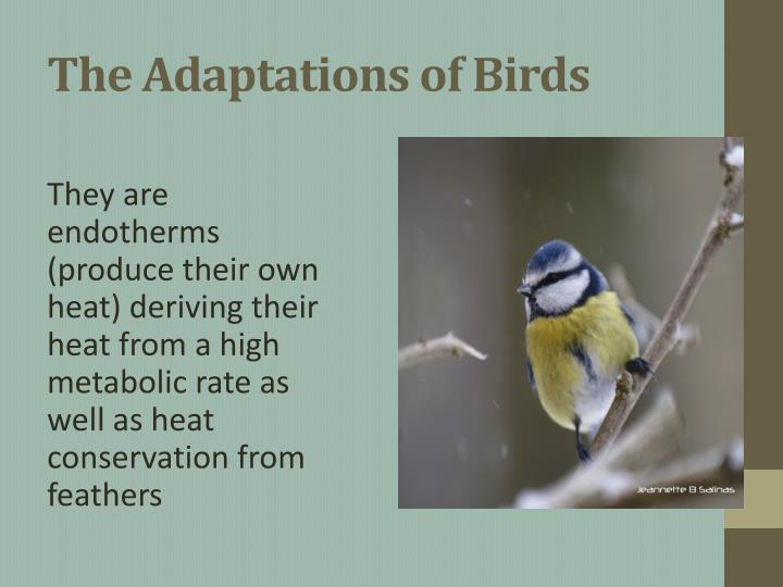 The Adaptations of Birds