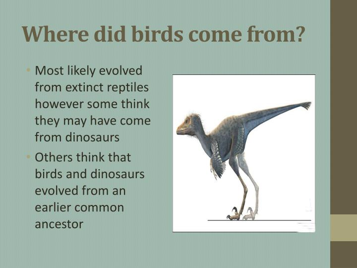Where did birds come from