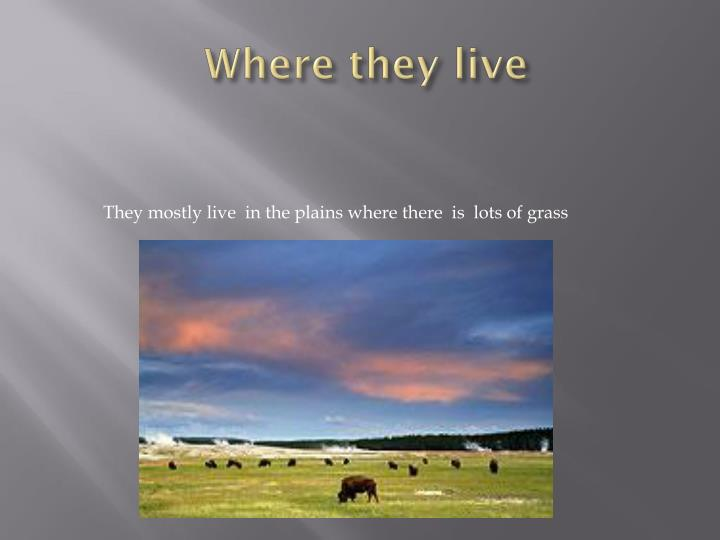 Where they live