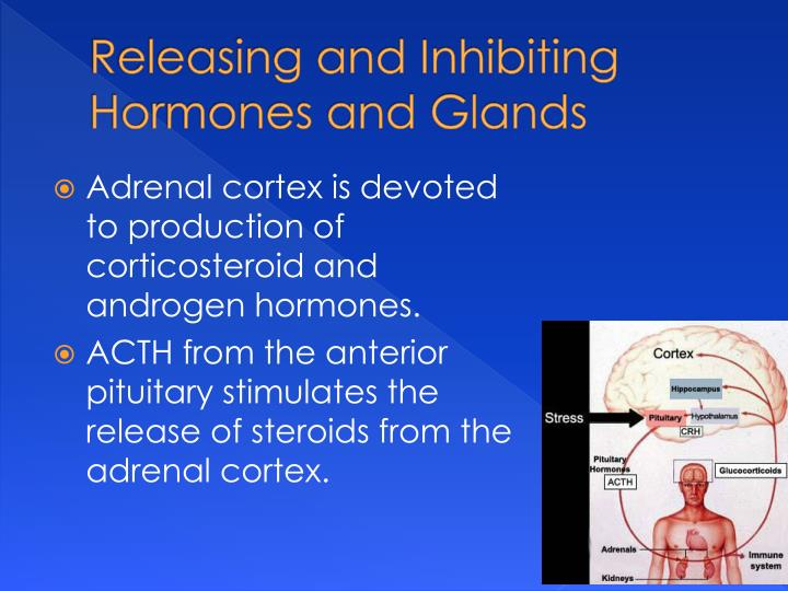 Releasing and Inhibiting Hormones and Glands