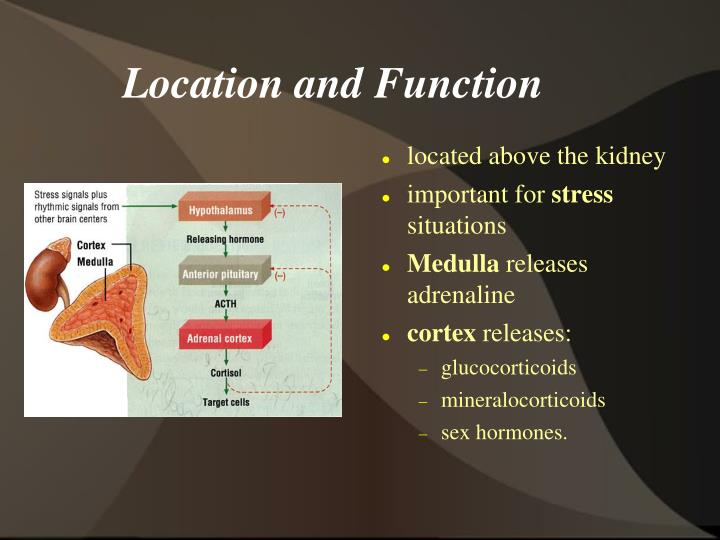 Location and Function