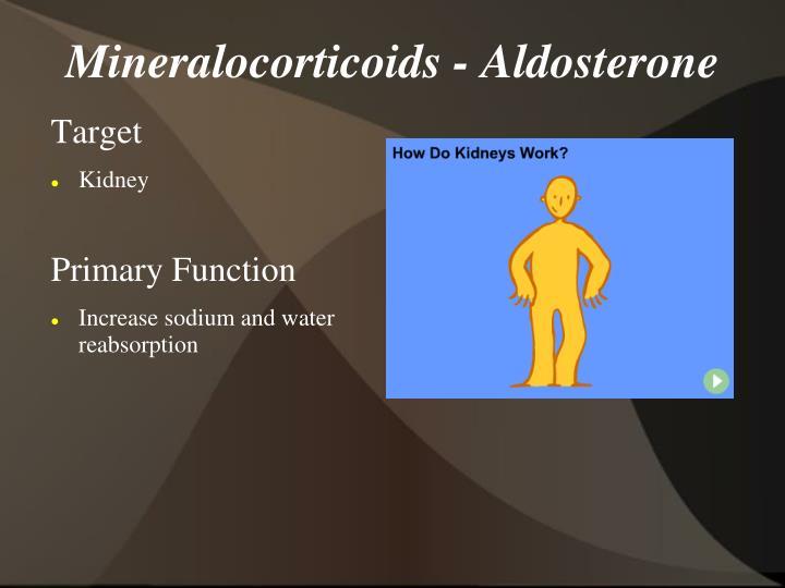 Mineralocorticoids - Aldosterone