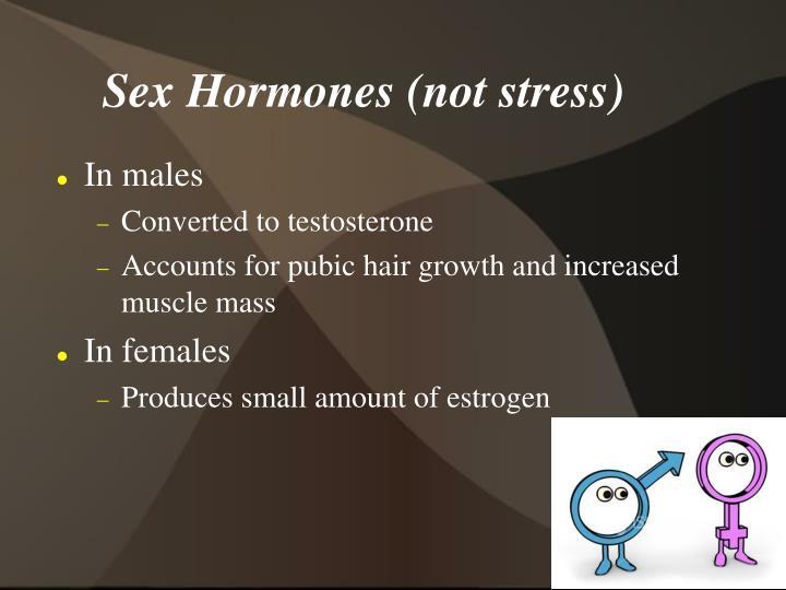 Sex Hormones (not stress)