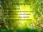 5 interesting facts
