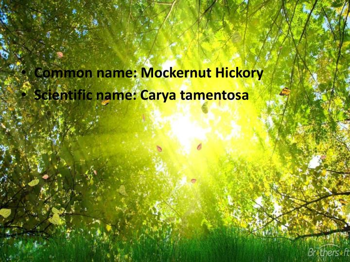 Common name:
