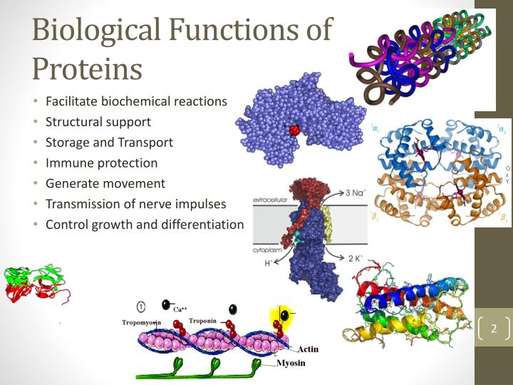 Biological Functions of Proteins
