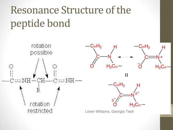 Resonance Structure of the peptide bond