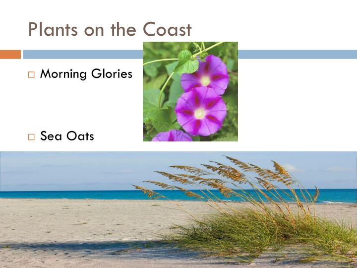 Plants on the coast