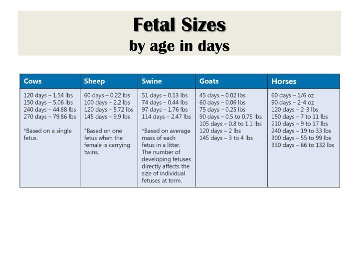 Fetal Sizes