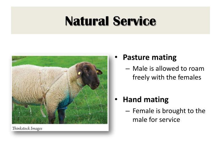 Natural Service