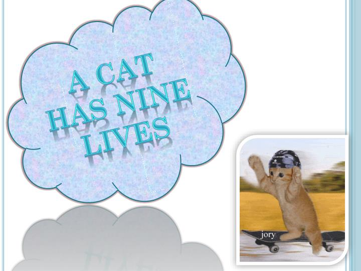 A cat has nine  lives