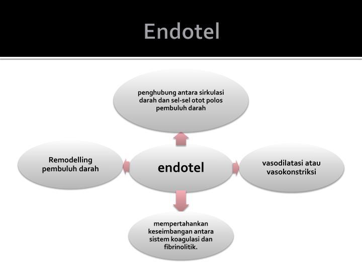 Endotel