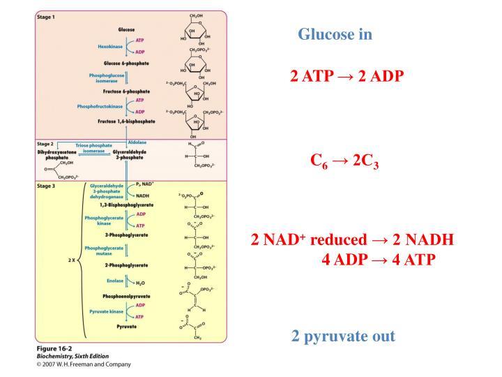 Glucose in