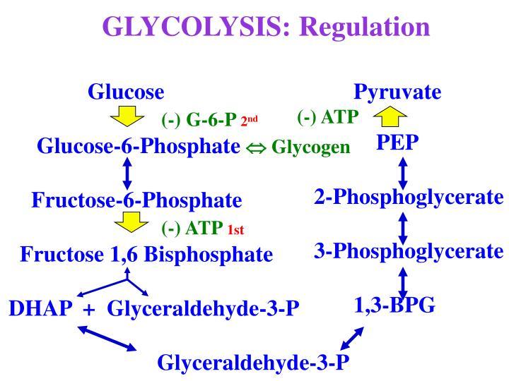 GLYCOLYSIS: Regulation