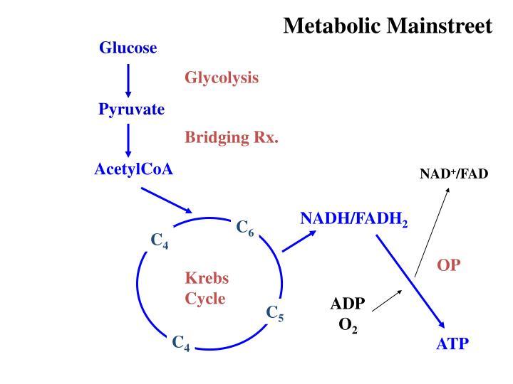 Metabolic Mainstreet