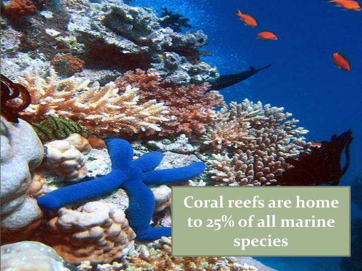 Coral reefs are home to 25% of all marine species