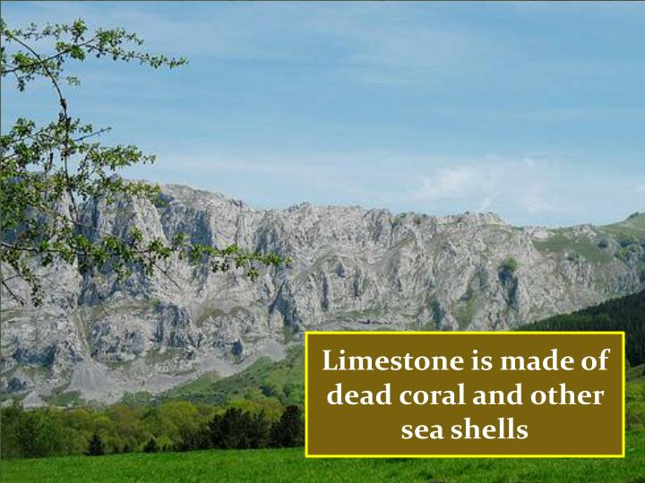 Limestone is made of dead coral and other sea shells