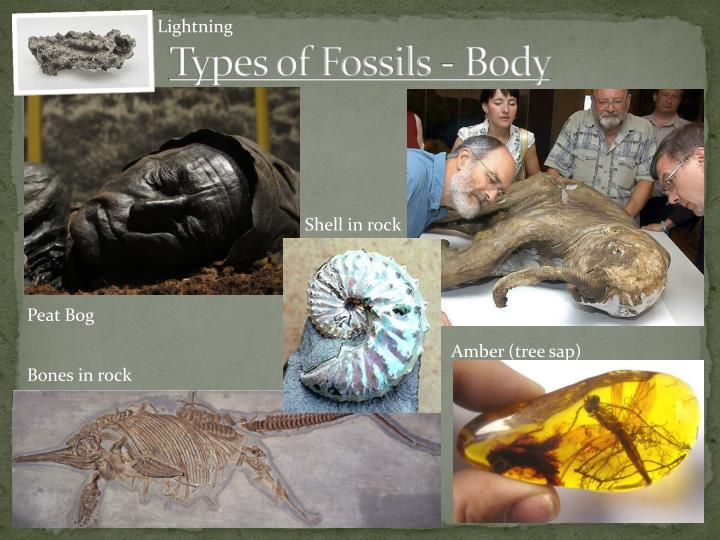 Types of Fossils -