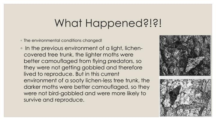 What Happened?!?!