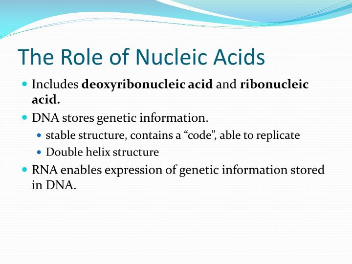 The Role of Nucleic Acids