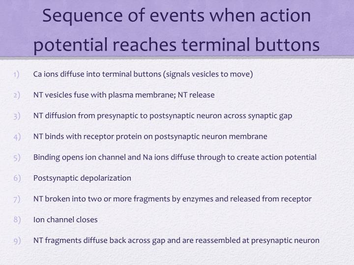 Sequence of events when action potential reaches terminal buttons