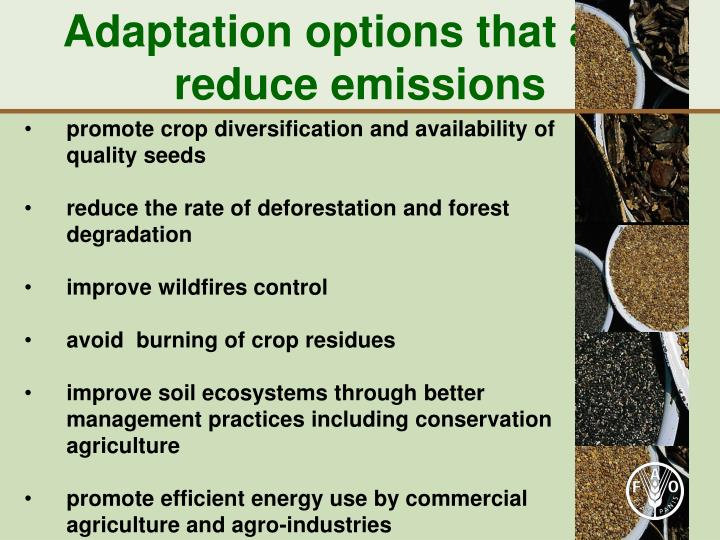 Adaptation options that also