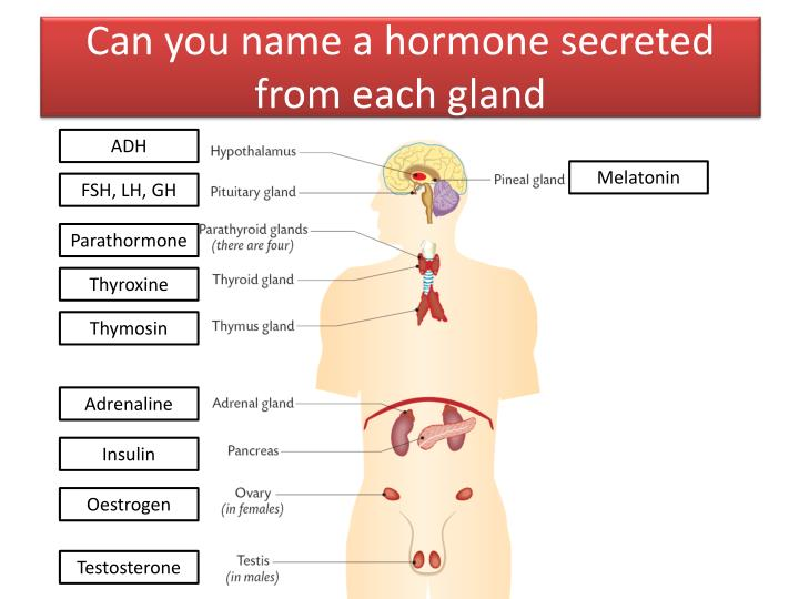 Can you name a hormone secreted from each gland