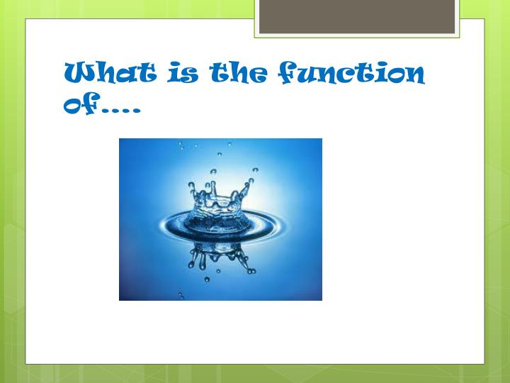 What is the function of….