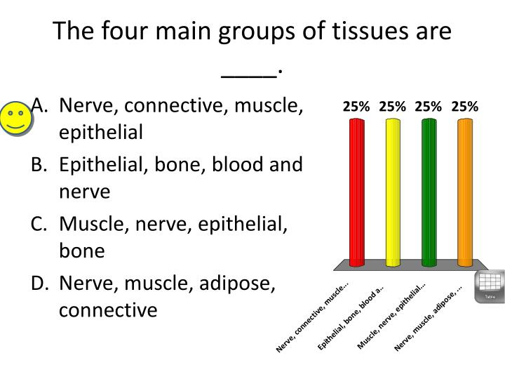 The four main groups of tissues are ____.
