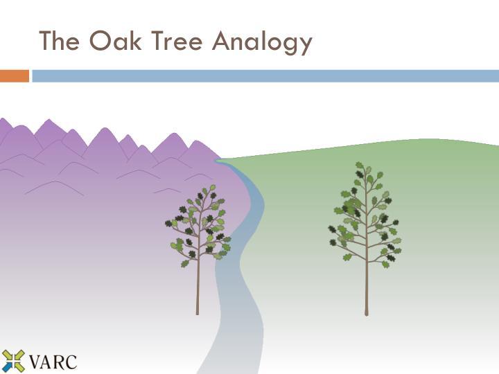 The Oak Tree Analogy