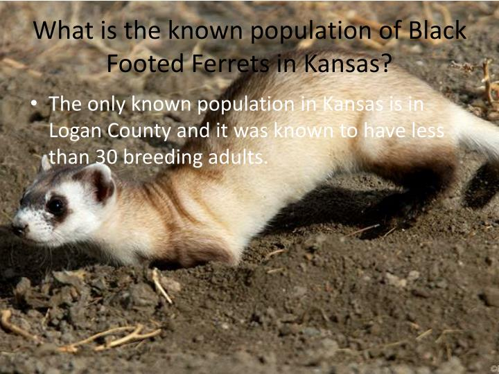 What is the known population of Black Footed Ferrets in Kansas?
